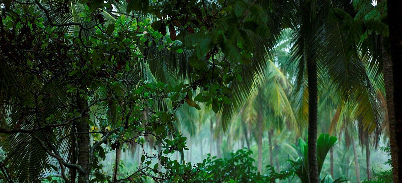 Afrika junior scalaz for Boden im regenwald