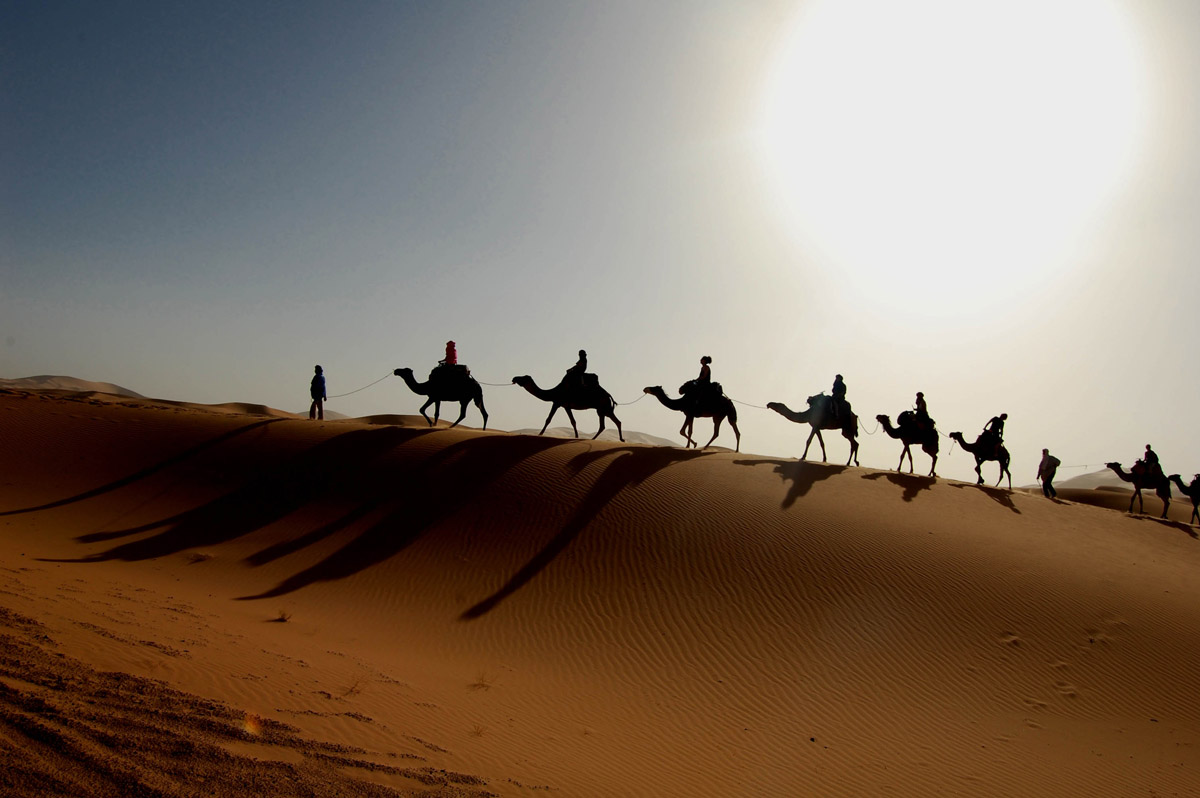 What Do Camels Eat in the Desert – Camel Diet