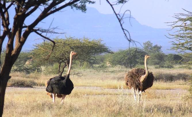 boden vögel südafrika