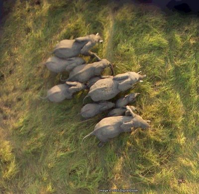 Elefanten im Okvangodelta (c) Google Earth Africa